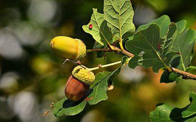 Vicelinkinder pflanzen einen Baum